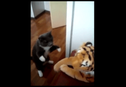 chat_tappe_tigre_peluche