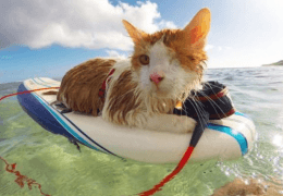 chat_borgne_surf