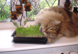 chats_drogue_herbe