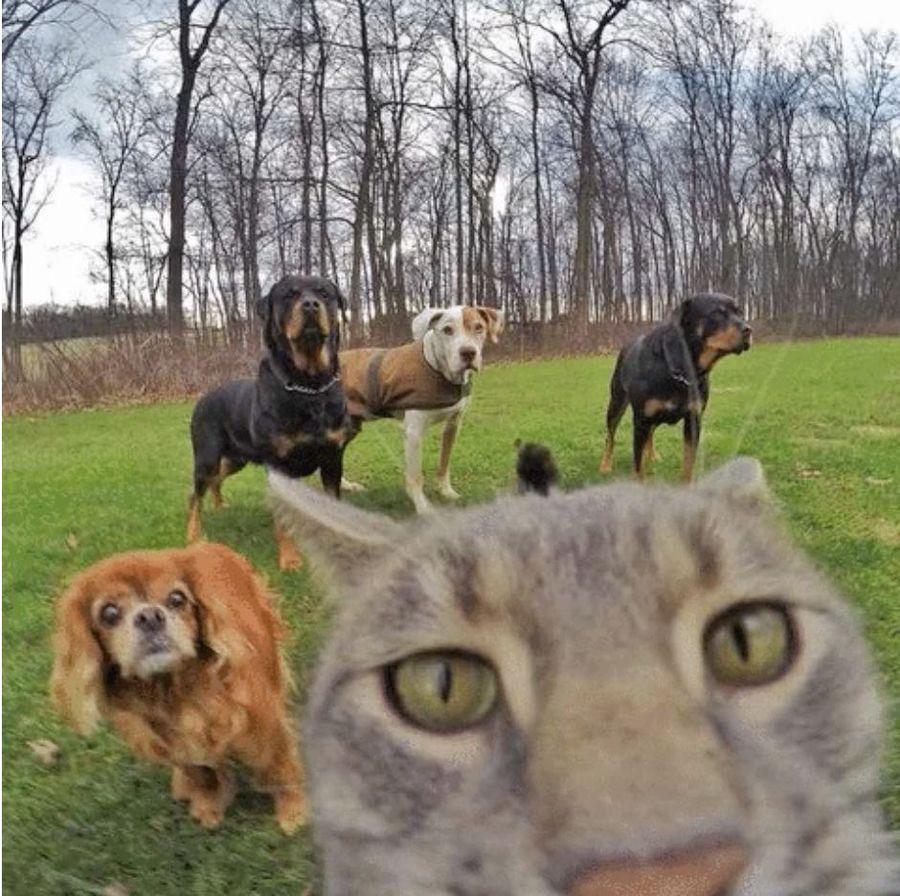 Chat_selfie_3