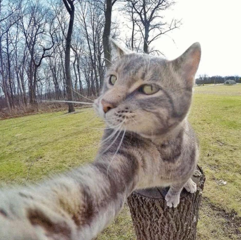 chat_selfie_2