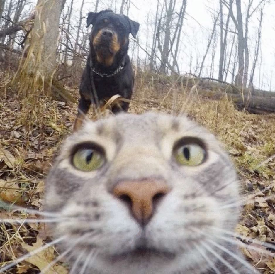 chat_selfie_5