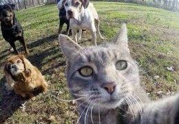 chat_selfie_6